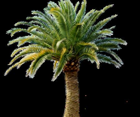 Palm-Tree-24